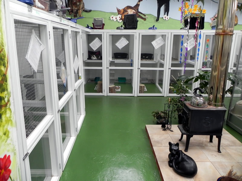 cattery interior 3